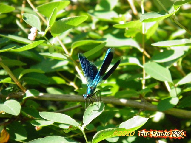 [Bild: Insekt0610_01.JPG]
