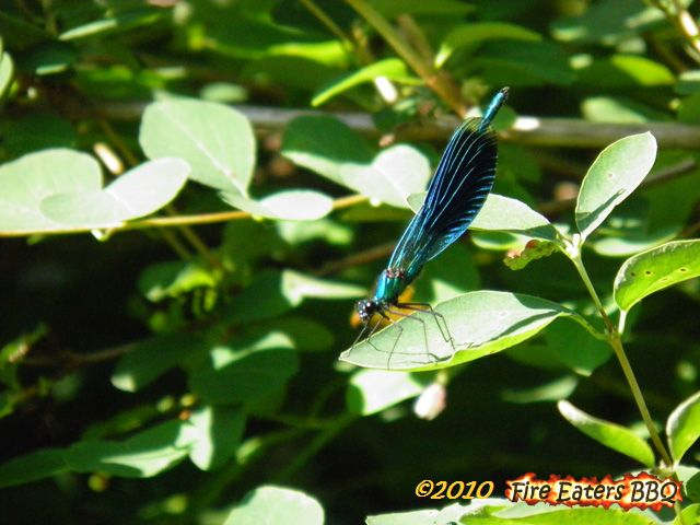 [Bild: Insekt0610_02.JPG]