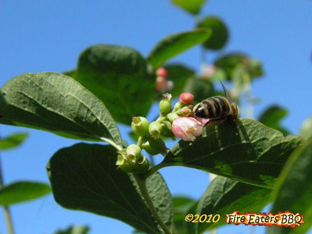 [Bild: Insekt0610_03.JPG]