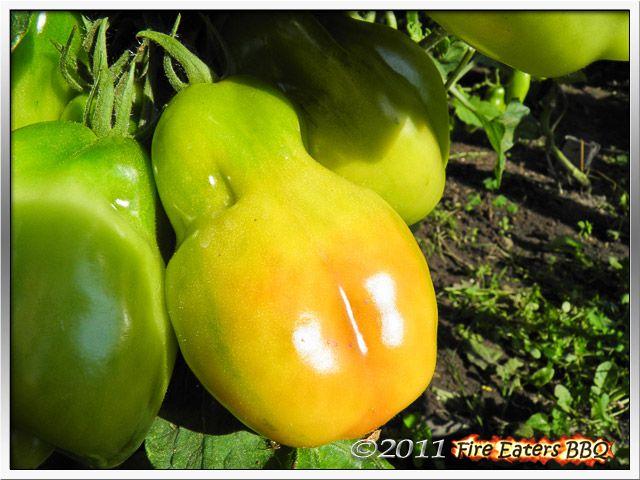 [Bild: Tomaten0811_05.JPG]