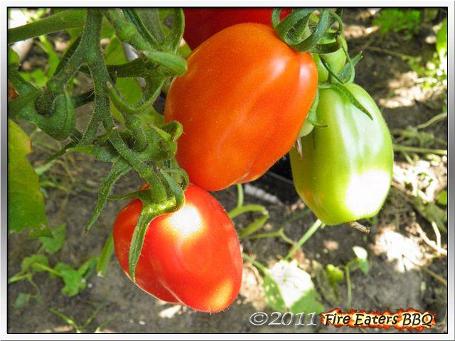 [Bild: Tomaten0811_06.JPG]