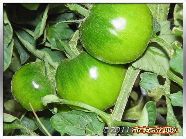 [Bild: Tomaten0711_05.JPG]