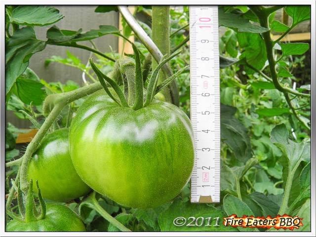 [Bild: Tomaten0711_09.JPG]
