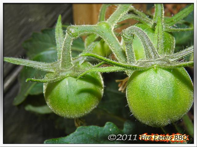 [Bild: Tomaten0611_03.JPG]