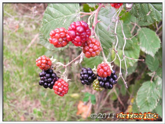 [Bild: Garten1011_03.JPG]