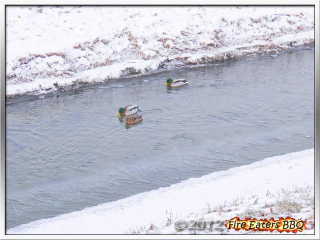 [Bild: Winter0212_01.JPG]