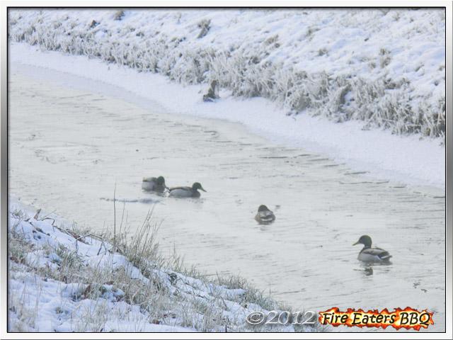 [Bild: Winter0212_02.JPG]