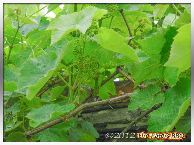 [Bild: Garten0612_04.JPG]