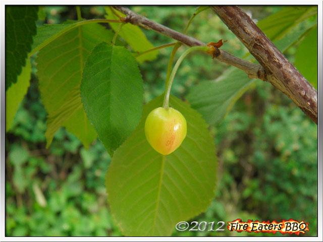 [Bild: Garten0612_07.JPG]