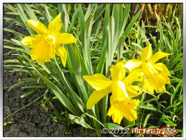 [Bild: Garten0312_01.JPG]