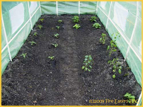 Auch das zweite Gewächshaus ist bepflanzt