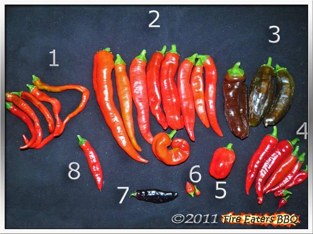 Bild - Eine kleine Chili- und Paprikaernte