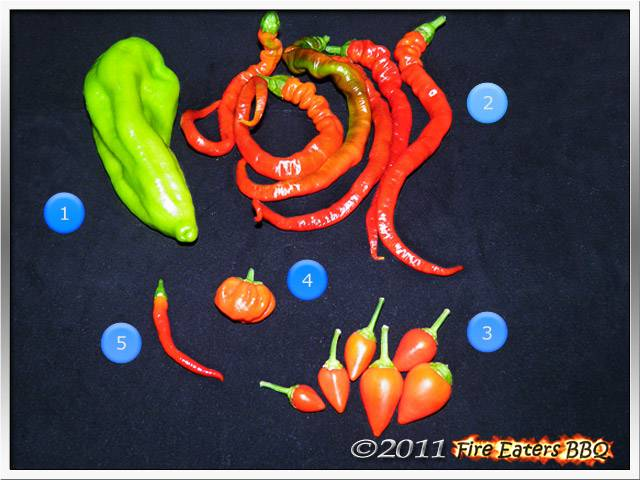 Bild - Geerntete Chilis