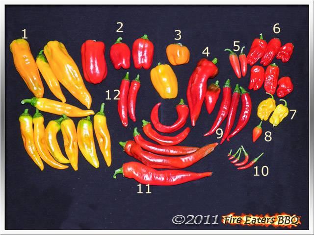 Bild - Eine schöne Ernte von Paprika und Chilis
