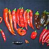 Chilisaison 2011 – Die erste Ernte im Juli und schon wieder Schnecken