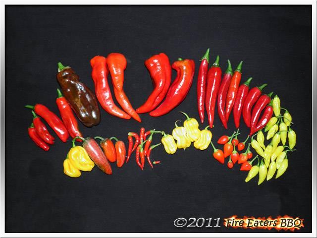 Bild - Frische Chilis und Paprika