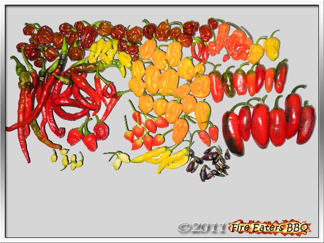 Bild - über 1 Kilogramm reife Chilis verschiedener Sorten