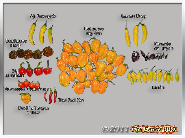 Bild - reife Chilis mit Sortennamen