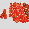 Die letzte Ernte vor dem Urlaub – Test der Scatolone-Tomaten