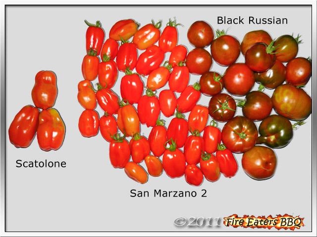 Bild - reife San Marzano, Scatolone und Black Russian Tomaten
