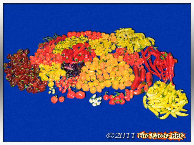 Bild - Über 3,8 kg reife Chilis verschiedener Sorten