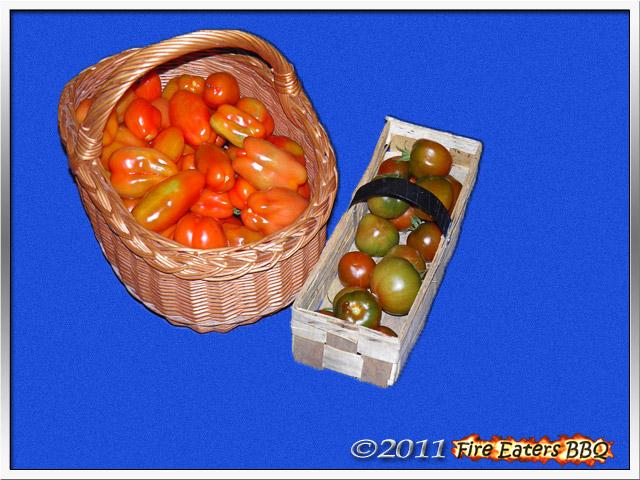 Bild - über 10kg Tomaten sind eine normale Ernte