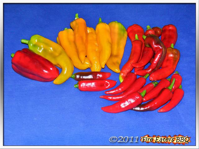 Gemüsepaprika nach der Ernte