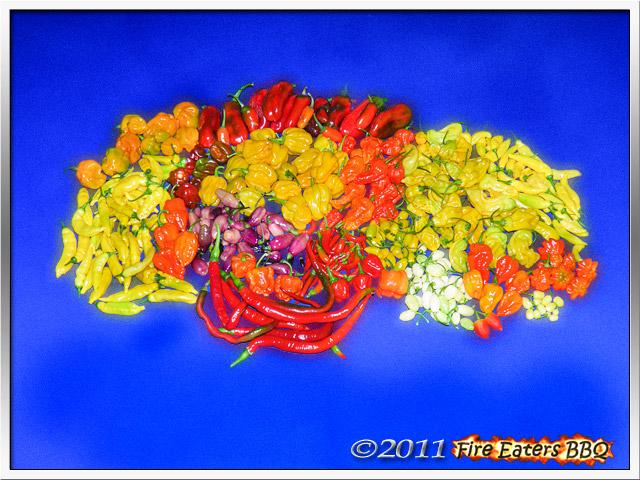 Eine Ernte von reifen Chilis verschiedener Sorten.