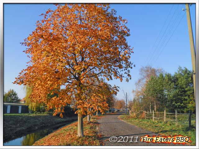 Kastanienbäume im Spätherbst