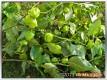 Jede Menge grüne Früchte