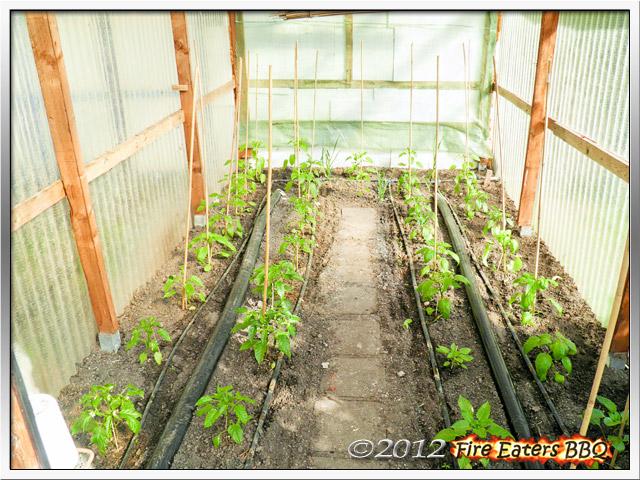 Blick auf die Paprikapflanzen