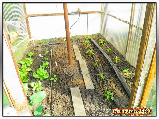 Paprika und Salat im Gewächshaus