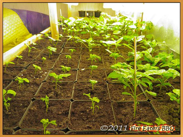 Unter der Lichtanlage wächst und gedeiht es