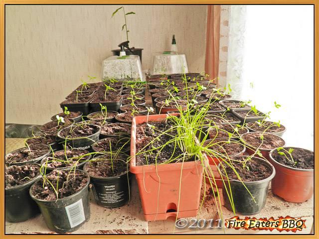 Auf der Lichtanlage stehen ebenfalls noch viele Pflanzen