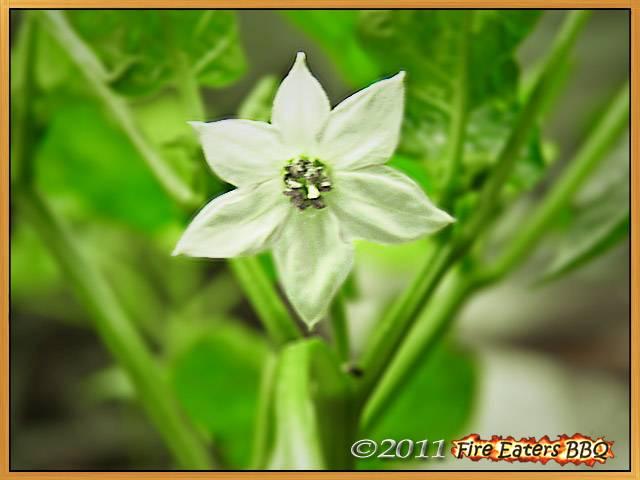 Die erste richtige Blüte