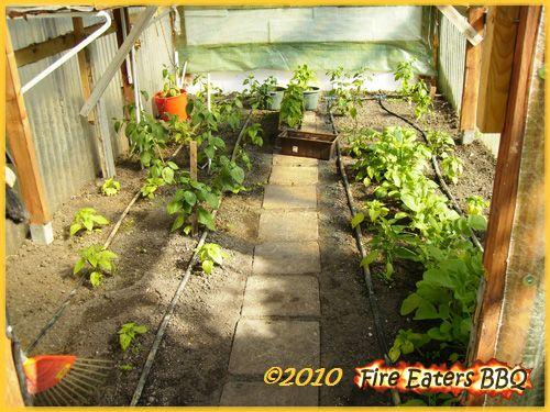 Kleines Fotoupdate von unseren Chilis, Tomaten und Co