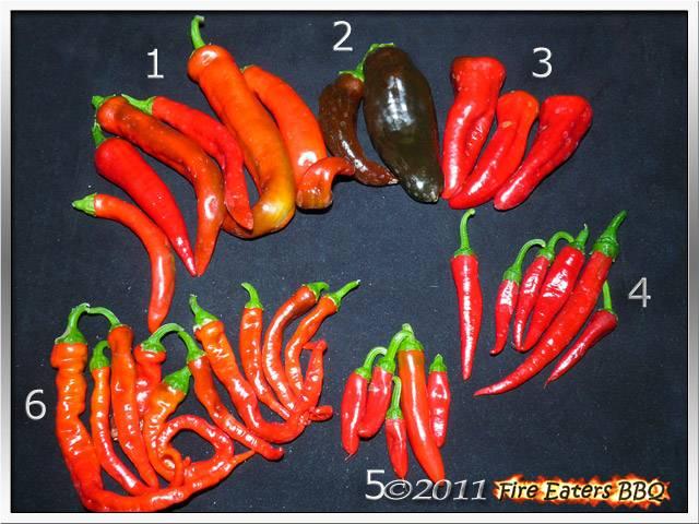 Bild - Reife Paprika und Chilis